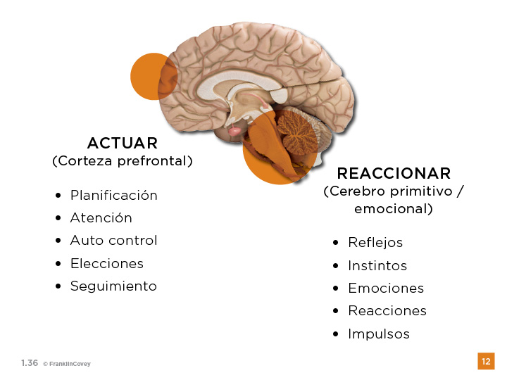 cerebro-productividad-covey